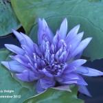 Longwood-Gardens-1260-max-150x150