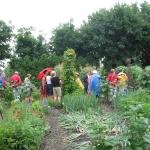 15 jardin des Gambades